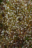 Little white flowers on the ground Royalty Free Stock Images