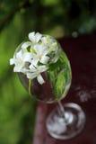 Little white flowers, Orange Jessamine, in glass vase. Royalty Free Stock Photos