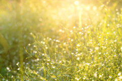 Little white flowers in sunset lights Stock Image
