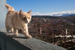 Little white cat on the balcony. royalty free stock photo