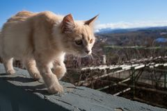 Little white cat on the balcony. royalty free stock images