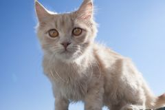 Little white cat on the balcony. stock photography