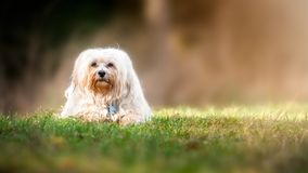 Dog in the meadow Royalty Free Stock Photography