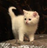 Little white kitten Stock Photo