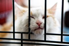 Little white kitten sitting in a cage. royalty free stock photos
