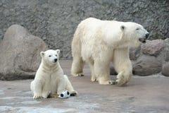 Little white polar bear with ball stock photos