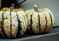 Little white pumpkins Stock Photo