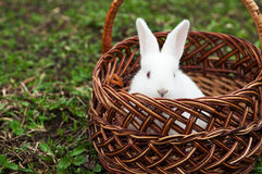 Little white rabbit Stock Photos