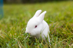 The little white rabbit Royalty Free Stock Images