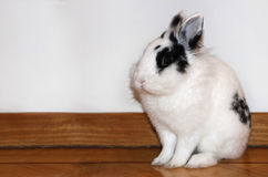 Little white rabbit. Cute white rabbit standing and resting Stock Photos