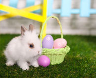 Little white rabbit and easter eggs in green grass Royalty Free Stock Photos