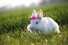 Little white rabbit on green grass in summer Royalty Free Stock Photo