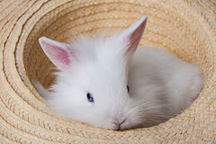 Little white rabbit in a hat Stock Image