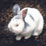 Little white rabbit in nature stock images