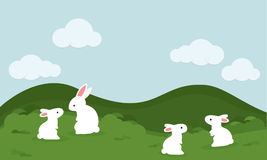 A little white rabbit stay alone in the garden. Royalty Free Stock Photos