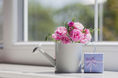 Little white watering can with roses and blue gift box near the Royalty Free Stock Photo