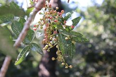 Little wild berries from forest royalty free stock photography