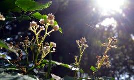 Little wild blomma Arkivfoton