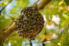Little wild hive with bees Royalty Free Stock Images