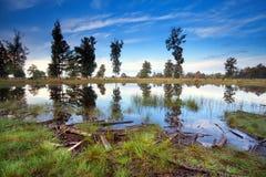Little wild lake in morning Stock Photo