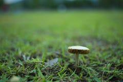 Little wild mushroom on green ground royalty free stock photo