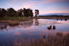 Little wild pond at sunset Royalty Free Stock Image