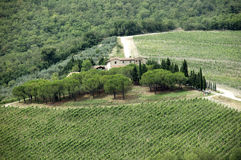 Little winery. Vineyard in tuscany, italy Stock Images