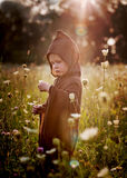 Little Wizard in Field Stock Images