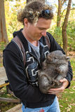 Little Wombat Holding Stock Photos