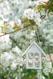 Little wooden house in Spring with blossom cherry flower sakura Stock Images