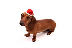 Little xmas dog Royalty Free Stock Photography