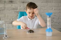 Little 6 year old boy examines the acidity of the soil Royalty Free Stock Photography