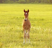 Little yellow boy on the field Royalty Free Stock Photography