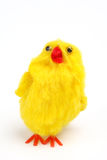 Little yellow chick Stock Images