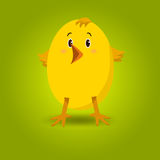 Little yellow chick Royalty Free Stock Images