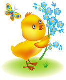 Little yellow chicken Royalty Free Stock Image