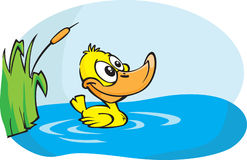 Little yellow duck Stock Images