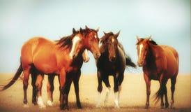 Many horses stand around royalty free illustration
