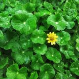 Little yellow flower. Little flower in among the bush Stock Photo