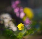 Little yellow flower Stock Photos
