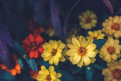 The Little yellow flower in the flowers farm. royalty free stock photos