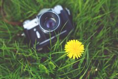 Little yellow flower and old camera Stock Image
