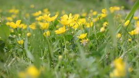 Little yellow flowers stock video