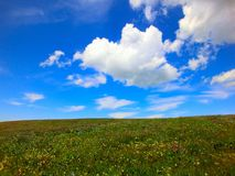 Little yellow flowers grow all over the grassland. Sometimes several clusters of white clouds drift across the blue sky Stock Photos