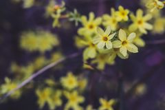 Little yellow flowers royalty free stock images