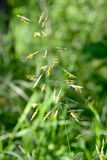 Little yellow flowers. Growing in grass Stock Photo