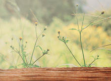 Little yellow flowers on wood Royalty Free Stock Photography