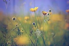 Little yellow meadow flowers Stock Photo
