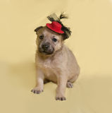 Little yellow puppy in red hat sits on yellow Royalty Free Stock Photos