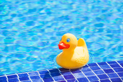 Little yellow rubber duck. Floating in the blue water of a swimming pool royalty free stock photo